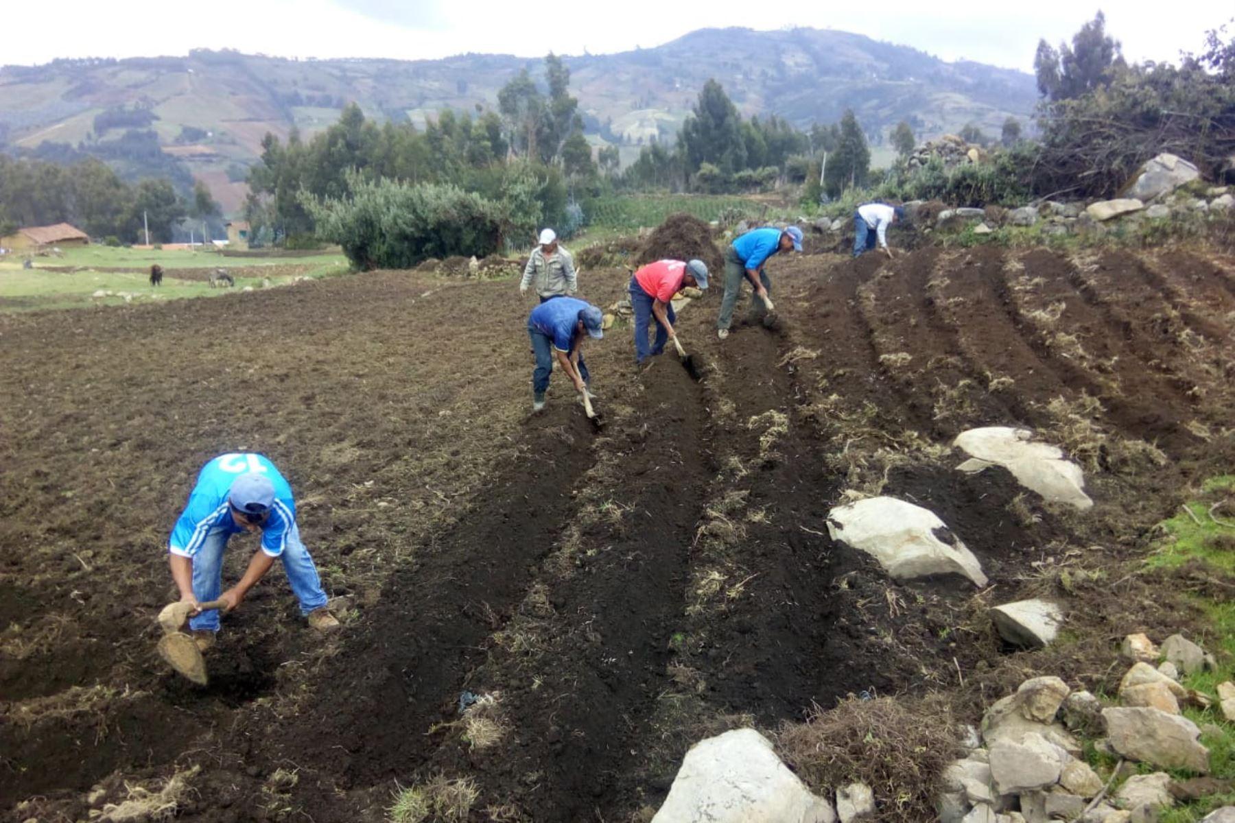 Los derechos fundamentales o bienes jurídicos constitucionales se afectan cuando el Estado abandona la agricultura campesina