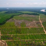 Ministerio de Agricultura debe denegar el instrumento de gestión ambiental y sancionar a empresa palmicultora