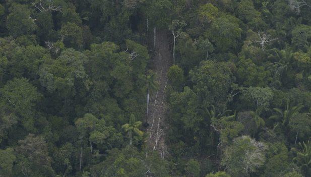 Pueblos indígenas demandan al gobierno peruano por la reapertura de la explotación forestal en los bosques mientras el COVID-19 se propaga por el Amazonas