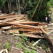 Orpio: La reactivación forestal en Loreto sí es un riesgo para los pueblos en aislamiento