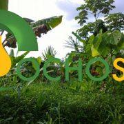 Ministerio de Agricultura deniega certificación ambiental a la palmicultora Ocho Sur P.